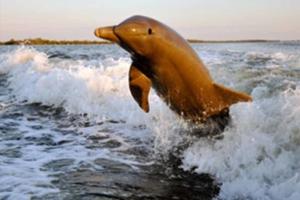 djurlivet cape coral delfin